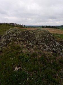 Žulové výchozy, které tvoří ostrovní ekosystém u Třebíče jsou vnořené v zemědělské krajině a porostlé suchomilnými trávníky vyznačující se mělkou a kamenitou půdou, vysycháním a velkým střídáním teplot. Foto G. Ottaviani