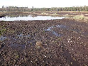 Na části dotěžené těžebny Hranice probíhá revitalizace – zahrazení odvodňovacích příkopů pomocí dřevěných přehrážek zvýší hladinu podzemní vody a spolu s vybudováním několika tůní podpoří diverzitu vodních a mokřadních organismů. Foto A. Kučerová