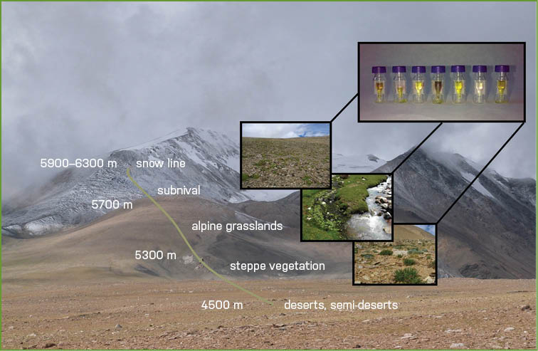 Study location in the area of Ladakh, India, Tibetan Plateau: Habitats and altitudes where the microbial photoprotective pigments from soils were extracted.