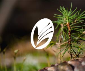 Nedostatek vláhy může být pro růst horských bylin větším omezením než nízká teplota