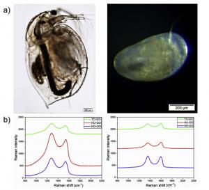 Representative optical microscopy images of Daphnia magna (left) and Heterocypris incongruens (right)