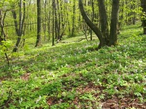 Rich biodiversity of plants grows under the tree canopy in European forests