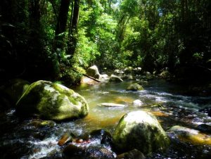 Tropical forests not only harbour high biodiversity, but also play key role in mitigating the climatic crisis