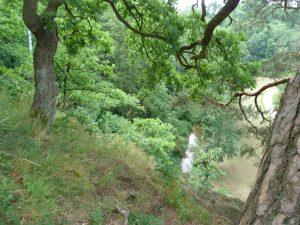 Přírodní ráz vegetace v původních suchomilných doubravách na skalnatých svazích v zámeckém parku ve Vlašimi.
