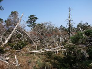 Národní park Hallasan (Jižní Korea), po ničivém tropickém cyklónu