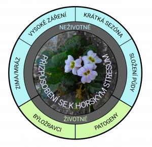 Vlastnosti vysokohorského prostředí, ke kterým si huseníčky přizpůsobily geny.