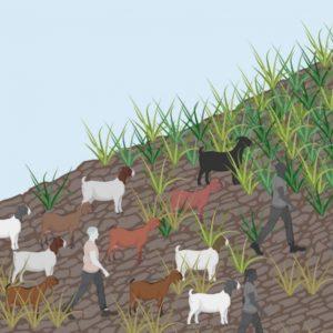 využívání půdy v minulosti