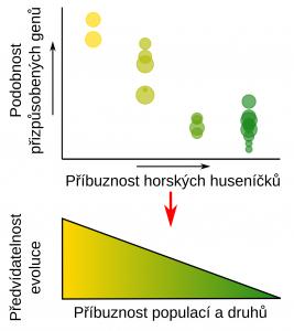 Příbuznější huseníčky se přizpůsobují pomocí podobnějších genů, jejich genetická odpověď na změnu prostředí je tedy předvídatelnější.