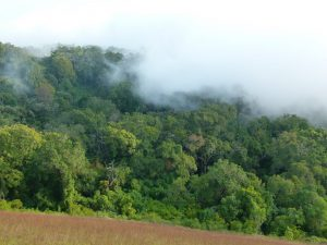 Tropický horský les v Africe